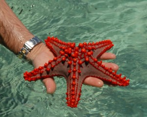 Touch a Starfish!